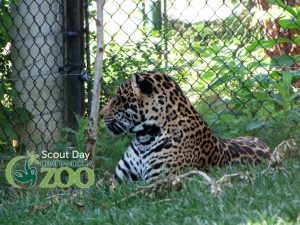 Chattanooga Zoo Scout Day